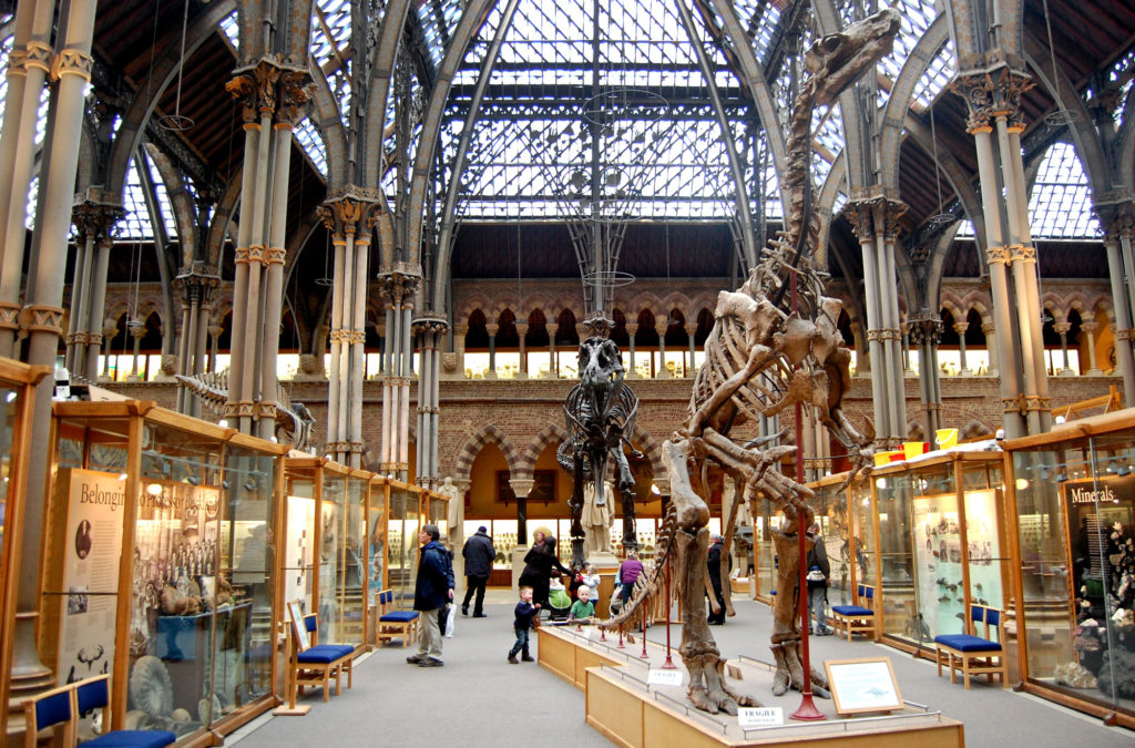 'Oxford University Museum of Natural History' © Magnus D (CC BY 2.0)