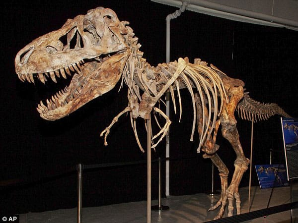 """Walking dinosaur"", the only permanent exhibition of the museum, opened to the public in 27th March 2015."