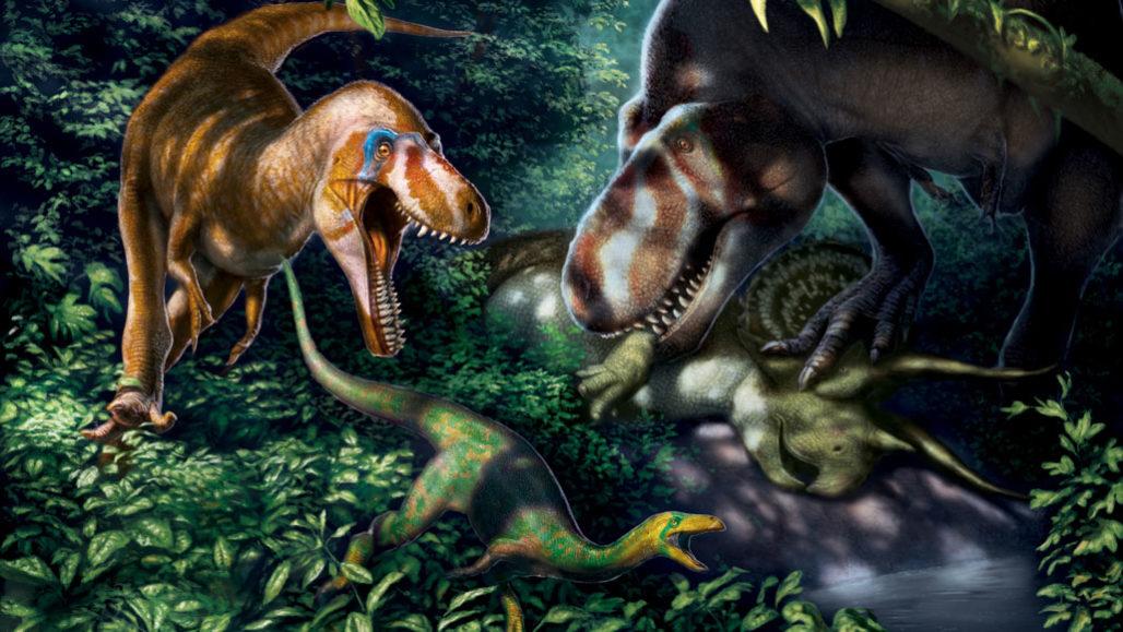 A dinosaur called Nanotyrannus (left in this illustration), once thought to be a smaller cousin of Tyrannosaurus rex (right), was probably a juvenile T. rex, a new study suggests.  JULIUS T. CSOTONYI