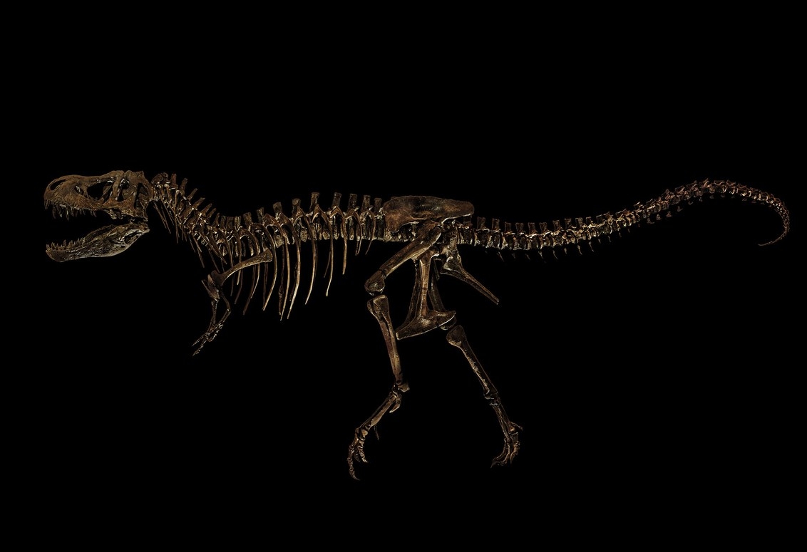 Voigt's idea was to isolate each skeleton, like he did with this Tyrannosaurus rex he photographed at the Dinosaurier-Park Altmühltal, in Denkendorf, Germany. Christian Voigt