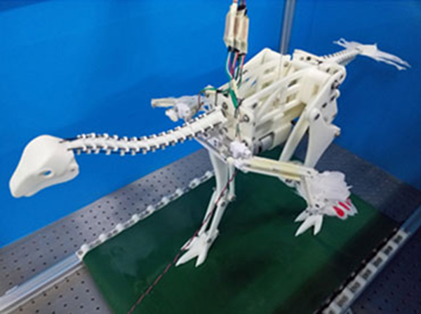 WORKOUT A life-size Caudipteryx robot on a treadmill allowed researchers to investigate whether a running motion might cause the dinosaur's wings to passively flap. Y.S. TALORI ET AL/PLOS COMPUTATIONAL BIOLOGY 2019