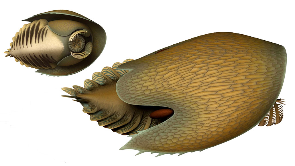 BOTTOM FEEDER  With a spaceship-shaped carapace, rakelike claws and a round tooth-filled mouth, Cambroraster falcatus (shown in an artist's rendition) hunted for food along the seafloor.