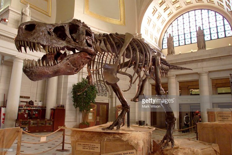 The 67-million-year-old Tyrannosaurus rex skeleton known as Sue stands on display at Union Station on June 7, 2000, in Washington, D.C. MARK WILSON/NEWSMAKERS/GETTY IMAGES