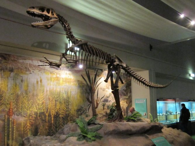 Megalosaurus skeleton, World Museum Liverpool, England. Found in southern England. Author: Rept0n1x