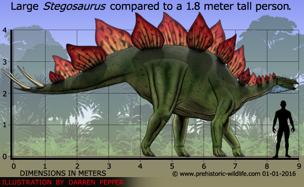 Stegosaurus by Prehistoric Wildlife