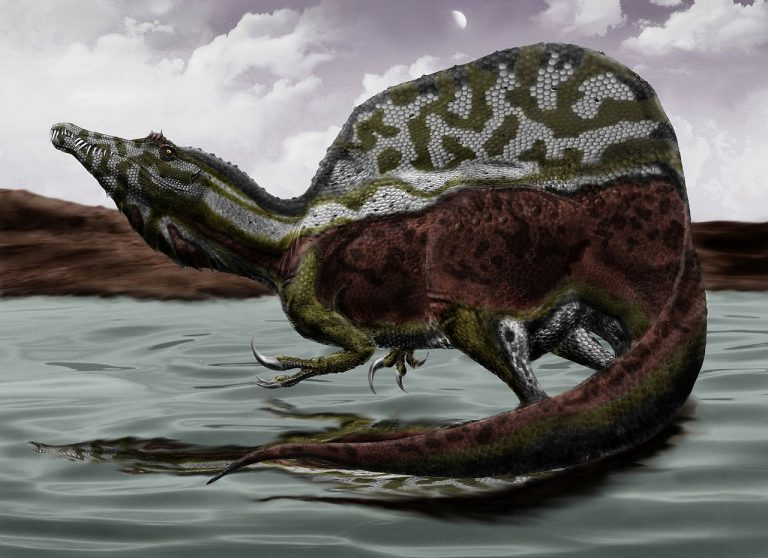 Life reconstruction of Spinosaurus aegyptiacus based on the recent description of a new specimen. Artwork by Durbed
