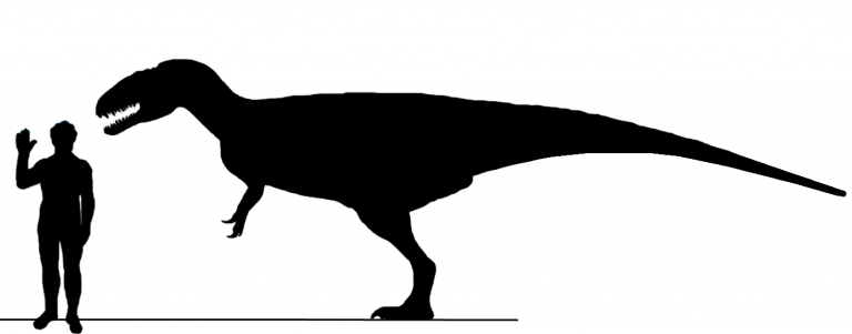 Relative size of Eocarcharia MNN-GAD2-11 and a human, based on Acrocanthosaurus and Concavenator. Based on MNN-GAD2-11 specimen. Body design based on Mapusaurus, Concavenator and Acrocanthosaurus. Author: Daspletosaurus 5000