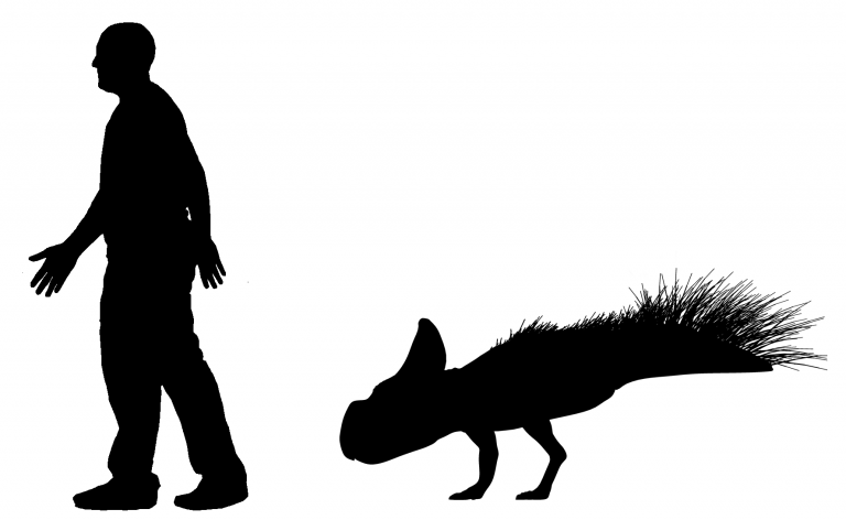 Size of P. andrewsi compared to a human