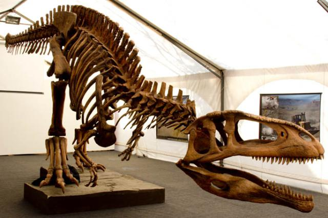 Tyrannotitan, a close relative of Giganotosaurus (Wikimedia Commons)
