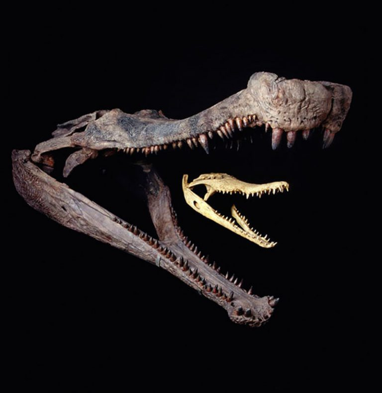 10 Facts About Sarcosuchus