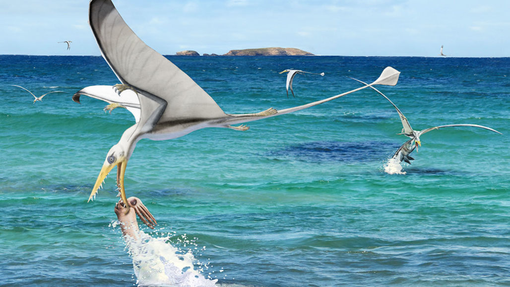 A Rhamphorhynchus pterosaur tries and fails to snatch a Plesioteuthis squid from the surface of the ocean in this artist's impression.  CHRISTIAN KLUG