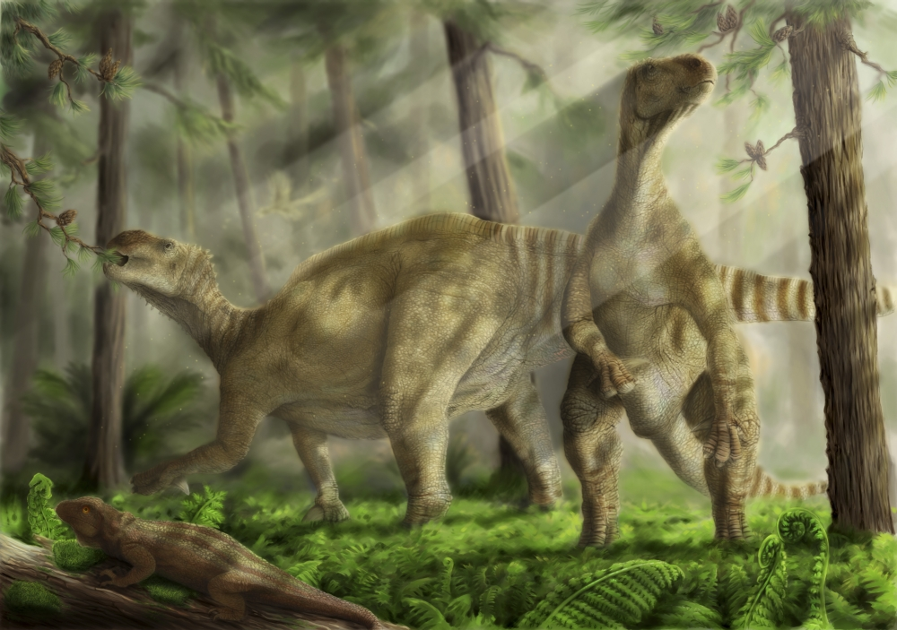 A pair of Iguanodon bernissartensis grazing Belgium Early Cretaceous Period Ardeosaurus in foreground Archaeopteryx in background