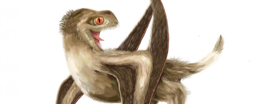 Image: Reconstruction of the studied pterosaur, with four different feather types over its head, neck, body, and wings, and a generally ginger-brown color. Credit: Reconstruction by Yuan Zhang.