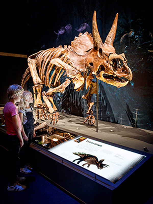 """Dirk,"" a Triceratops skeleton on view at Naturalis, the Netherlands' national natural history museum. Data from Peabody specimens contributed to the reconstruction of Dirk's skull. (Photo credit: Mike Bink Fotografie)"