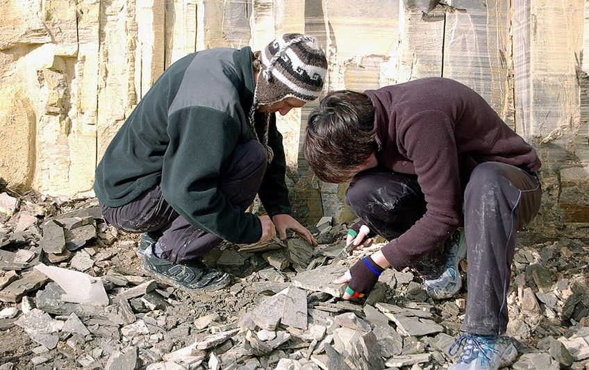 Student scientists looking for bones in New Zealand. (Wikimedia/Larusnz/CC BY-SA)