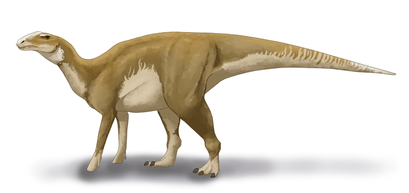 This hadrosaurus does not approve of your behavior. Image credits: Audrey M / Wikipedia.