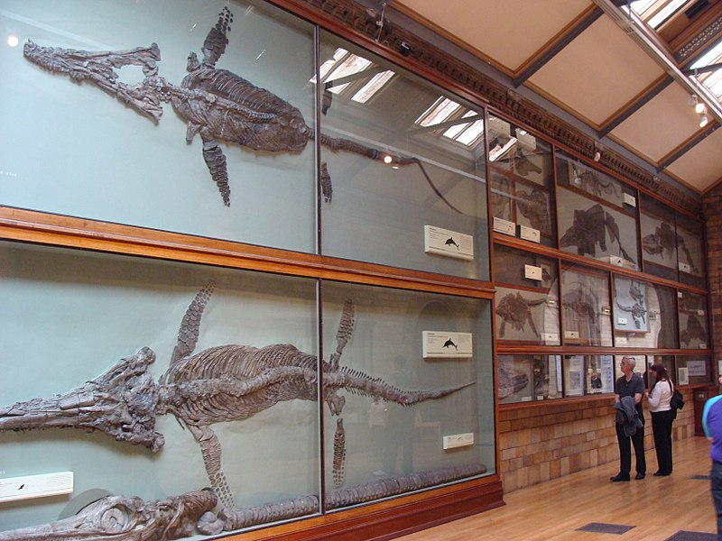 Hawkins' specimens are still the showpieces of the Natural History Museum