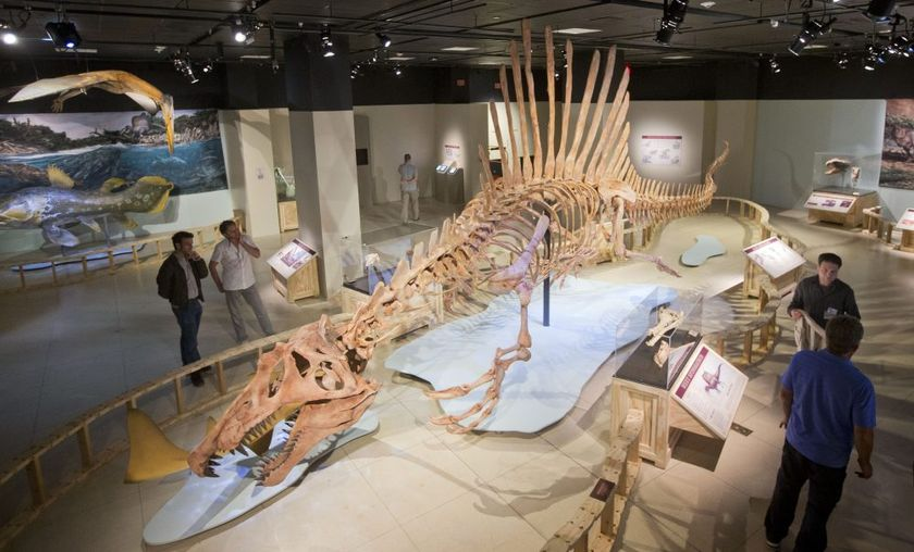 A 50-foot life-size model of a Spinosaurus dinosaur at the National Geographic Society in Washington, FILE PHOTO