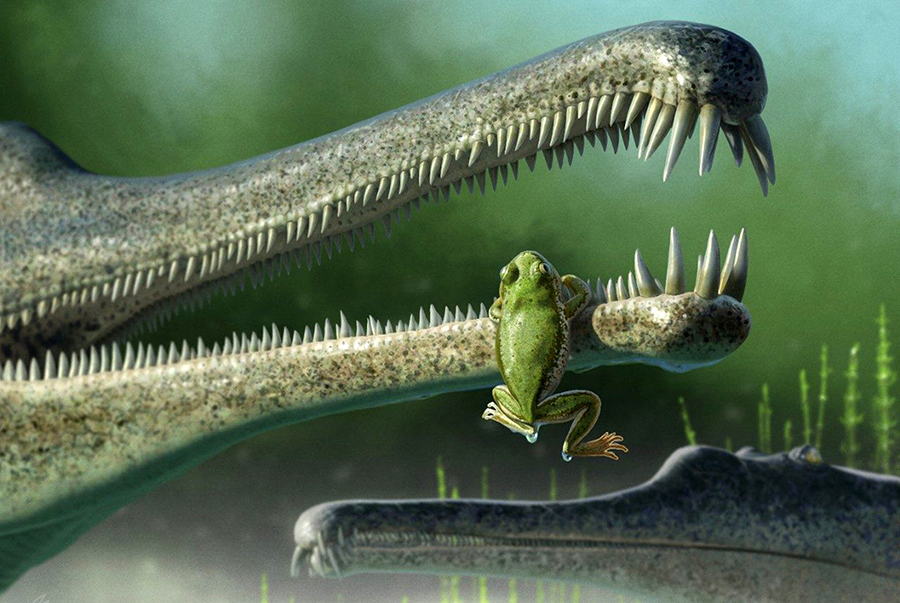 A Chinle frog, inside the jaw of a phitosaur. Image credit: Andrey Atuchin.