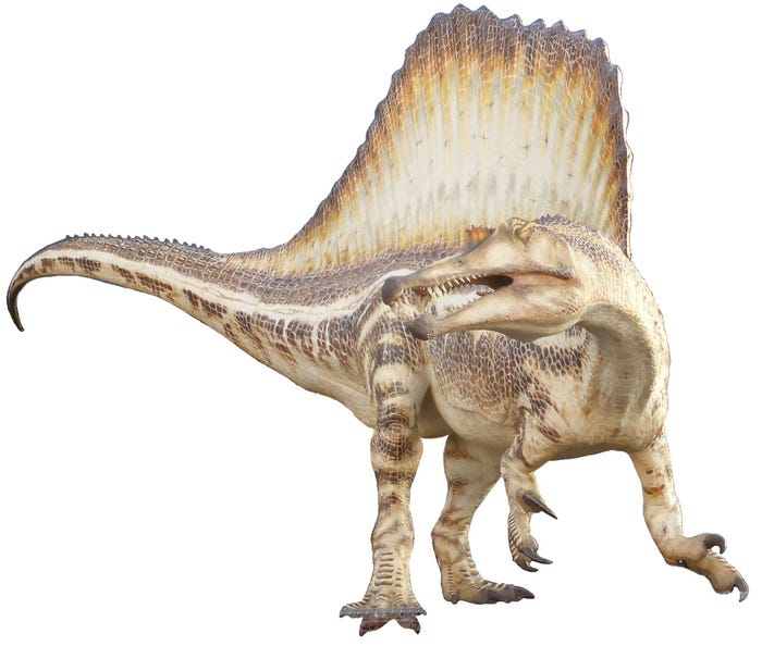 A Spinosaurus reconstruction from the Museu Blau in Barcelona, Spain. Martin Thoma/Wikimedia Commons