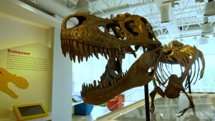 A bronze Albertosaurus statue is the main attraction in the Royal Tyrrell Museum's new learning lounge