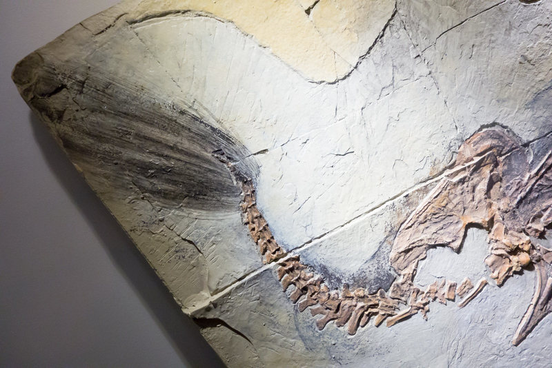 A dinosaur imprint from the Yixian Formation. KENNETH LU/CC BY 2.0