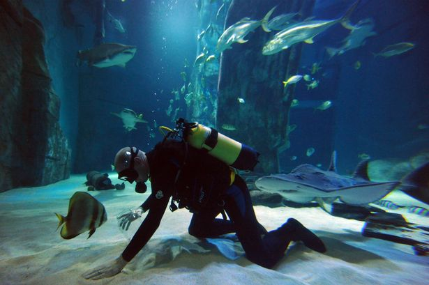 A diver collects shark teeth in the Sea Life Aquarium in central London. It's a sobering thought, but sharks actually once swam through what is now London
