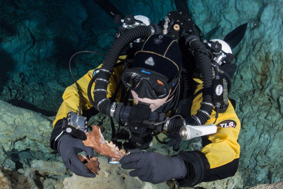 PHOTO: A diver holds the jaw and vertebra of one of the fossilised animals. (Supplied: ETSU)