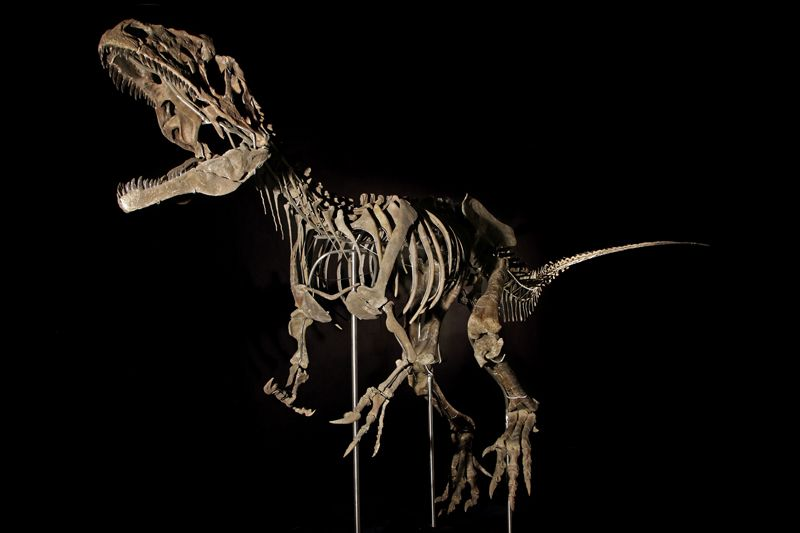 A fossil that may represent a new species of dinosaur is being sold at auction in Paris.Credit: Aguttes