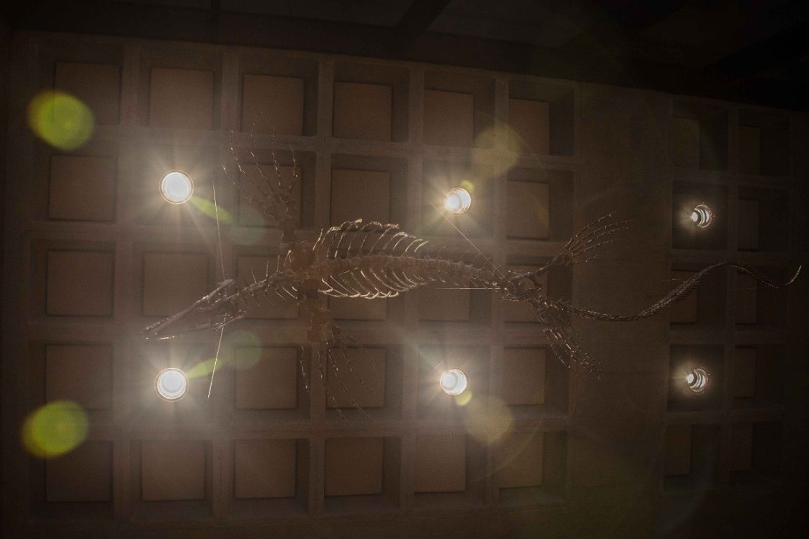 A fossilized mosasaur found in Kansas in 1991 is suspended from the ceiling of UC's Geology-Physics Building where it is on public display. Credit: University of Cincinnati
