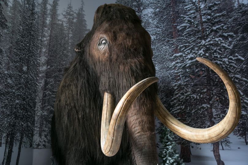 A large scale replica of a prehistoric woolly mammoth of the kind that would have roamed London thousands of years ago (Image: Getty Images)