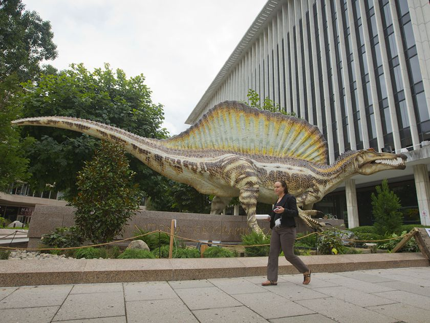 A model of a Spinosaurus is displayed outside the entrance at the National Geographic Society in Washington. PABLO MARTINEZ MONSIVAIS / AP