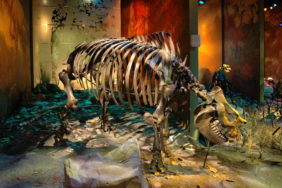 A new species of rhino was recently found at Gray Fossil Site.