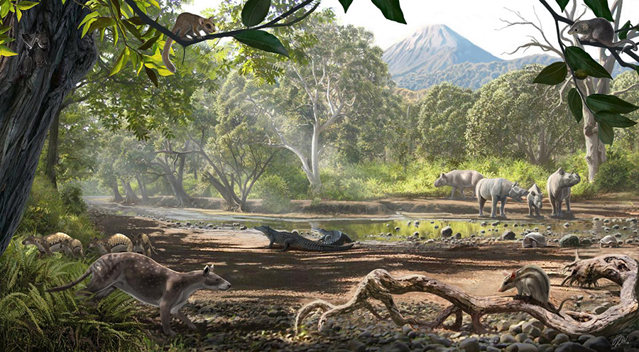 A reconstruction of the Eocene of Turkey, where the small marsupial was found. Besides the marsupials, the fauna includes embrithopods (the rhino-like animals of the background, more related to elephants and sea cows), pleuraspidotheriids (primitive ungulates with a deer/dog look), a group of primates called omomyids, bats, tortoises and crocodiles. CREDIT: OSCAR SANISIDRO | UNIVERSITY OF KANSAS