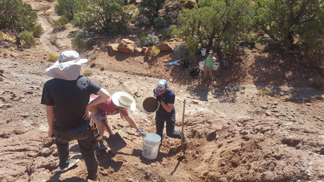 Paleontologists excavate a phytosaur fossil in what was Bears Ears National Monument in September 2017. The site turns out to harbor a rich deposit of Late Triassic fossils in the Chinle Formation.  (Photo courtesy of Robert Gay)