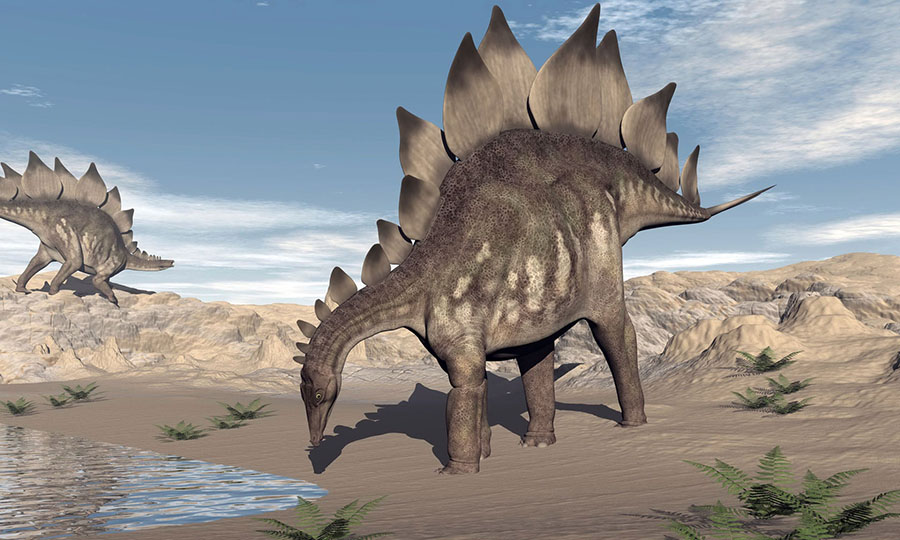 A stegosaurus dinosaur drinking water in the desert. Photograph: Stocktrek Images/Alamy