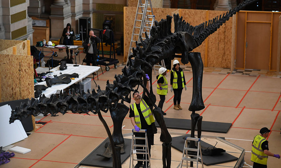 A team of specialists piece Dippy back together in Glasgow. Photograph: Jeff J Mitchell/Getty Images