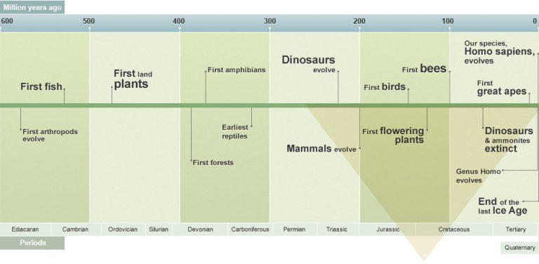 A timeline of the last 600 million years, showing major events in evolution.