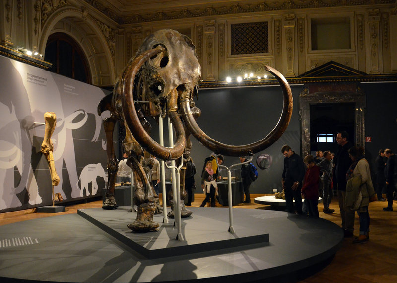 A woolly mammoth on display at the Natural History Museum, Vienna. MONIKA ĎURÍČKOVÁ/CC BY 2.0