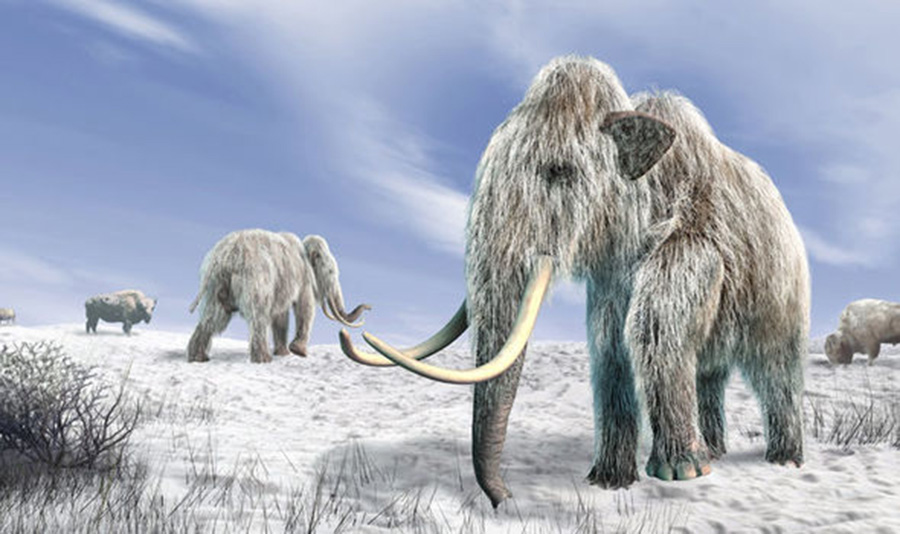 A new £4.5 million cloning facility is aiming to bring back to life the extinct woolly mammoth (Image: GETTY)