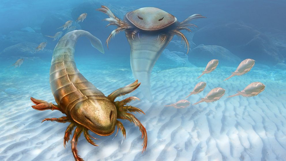 This rendering provided by Yale University shows a Pentecopterus decorahensis. Earth?s first big predatory monster was a weird water bug, newly found fossils show.