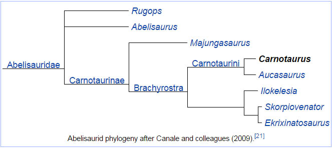 Abelisaurid phylogeny after Canale and colleagues (2009).