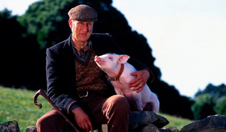 Actor James Cromwell as Farmer Hoggett in Babe – Credit: Universal Pictures