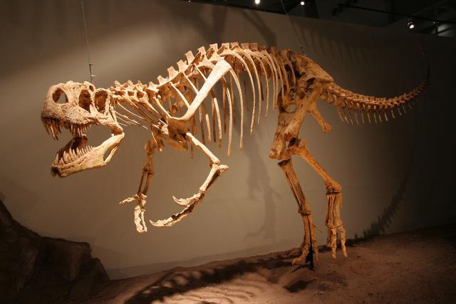 Afrovenator, an important dinosaur of Africa. Photo Credit: Wikimedia Commons