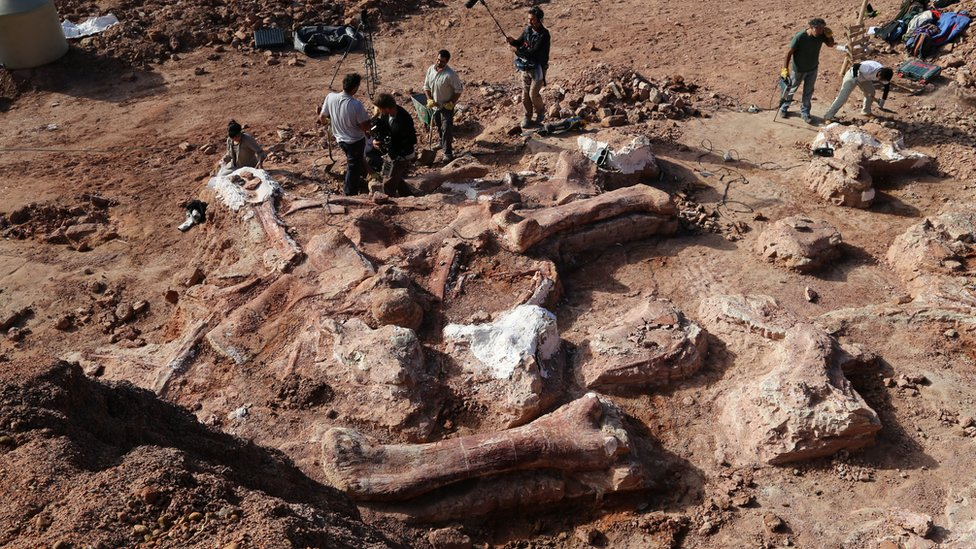 Fossilised bones of a dinosaur in Argentina