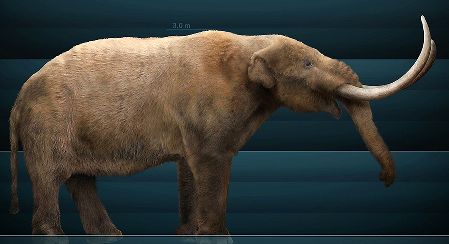Reconstruction of the American mastodon (Mammut americanum). Image credit: Sergio De la Rosa Martinez / CC BY-SA 3.0.