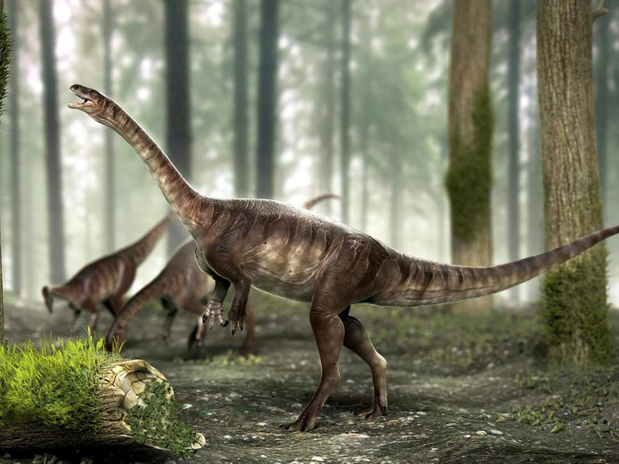 An artist's impression of the three newly discovered long-necked dinosaurs ( SWNS )