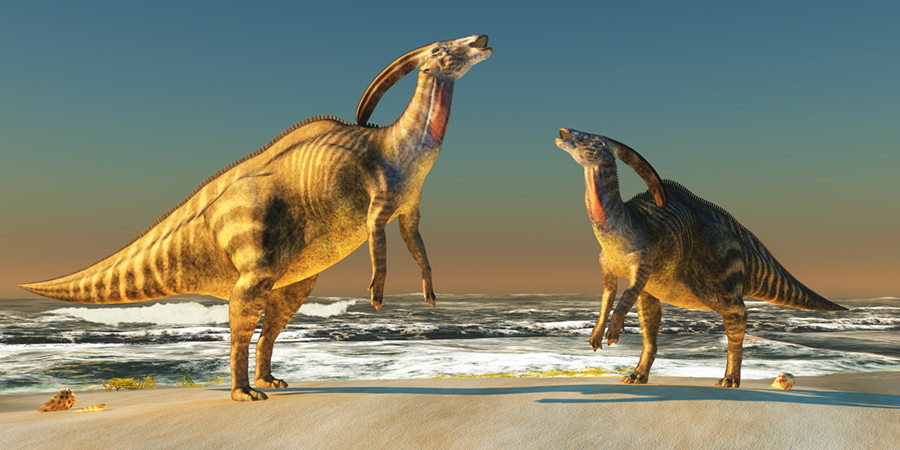 An illustration of two Parasaurolophus dinosaurs bellowing at each other to claim territory.  Corey Ford/Getty Images