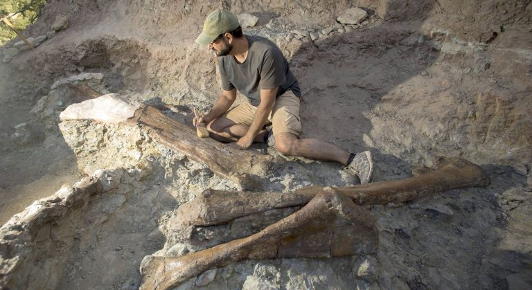 An image of the bones found next to paleontologist Fernando Escaso. Ángel Sánchez