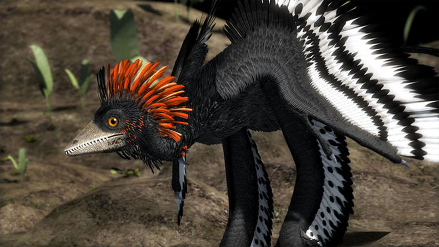Anchiornis dinosaur feathers were likely an evolutionary intermediate on the way to flight. ROBERT CLARK/NATIONAL GEOGRAPHIC